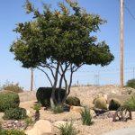dry arizona